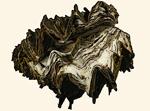 Gryphaeidae