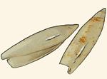 Seraphsidae