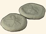 Laganidae