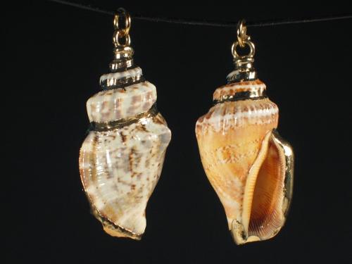 Schnecken-Anhänger Canarium labiatum goldig
