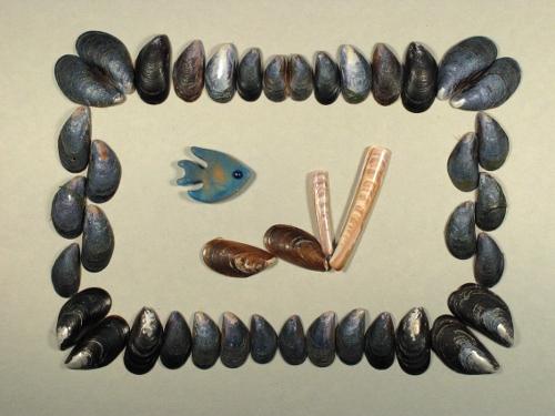 Miesmuschel 2-3cm (x20)