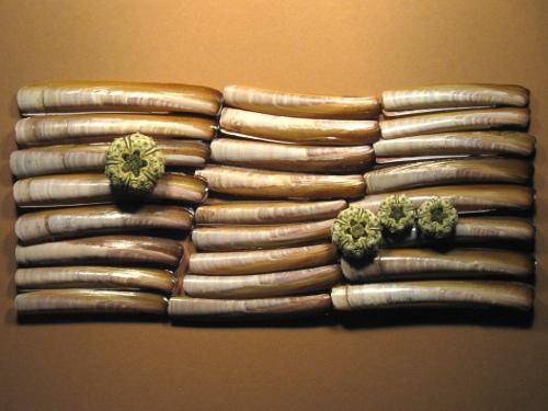 Amerikanische Schwertmuschel 6-10,5cm (x6)
