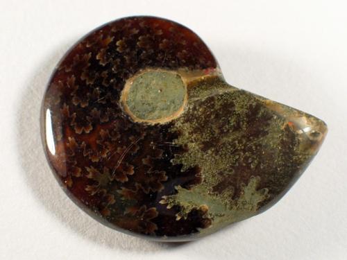 Ammonit Kreide MG 4,7cm