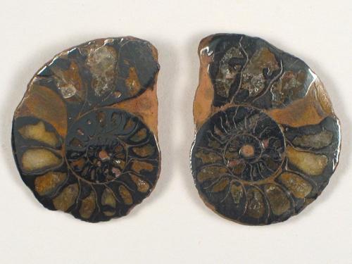 Hämatit-Ammonit Paar Jura MA