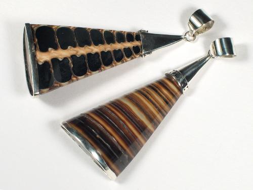 Telescope Whelk pendant w/silver 5,5cm
