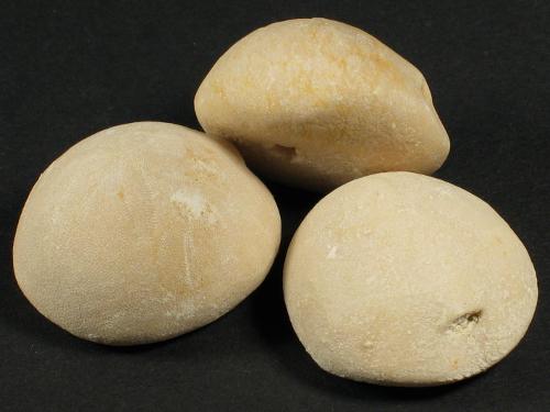 Cassidulus gouldii Oligozän US 2,8+cm