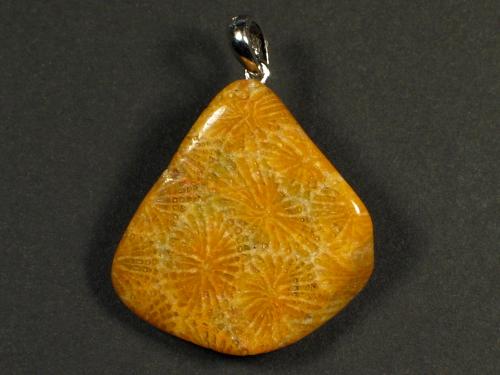 Anhänger fossile Koralle mit Silberöse 2,7x2,7cm