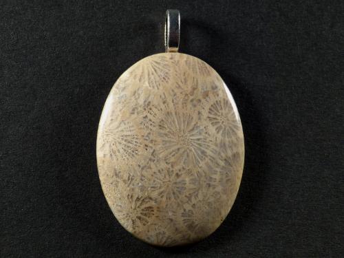 Anhänger fossile Koralle poliert oval 3,6cm