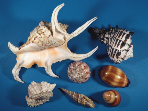 Shell assortment (x7) ~ special price