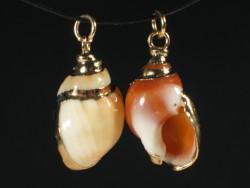 Shell pendant Nassarius auricularius golden