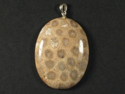 Pendant fossil coral polished w/silver 4,0x3,0cm