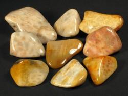 Korallenachat - Fossil aus dem Miozän ID 1,5+cm (x5)