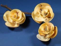Vanille Venus-muschel 1/2 1,5-3,5cm (x12)