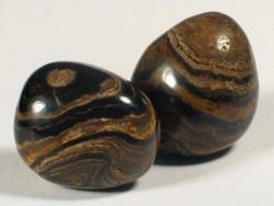 Versteinerung Stromatolith poliert Kreide BO 2,2+cm