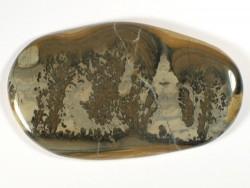 Stromatolith Querschnitt - Fossil aus dem Trias UK