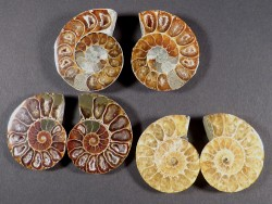 Ammoniten-Schnitt poliert paarig Kreide MG 3,5+cm (x2)