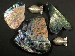 Paua-Stücke 4-6cm (20g)