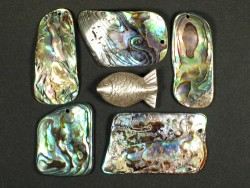 Paua pieces 2,5-4cm drilled (10g)