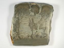 Stromatolith Querschnitt Trias UK