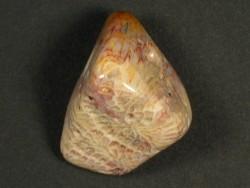 Trommelstein fossile Koralle mit Bohrung 2,9cm
