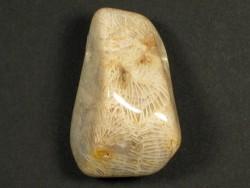 Trommelstein fossile Koralle mit Bohrung 3,1cm
