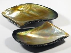 Pteria-Bowl 13cm