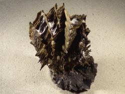 Hyotissa hyotis Cluster PH 15,5cm *Unikat*