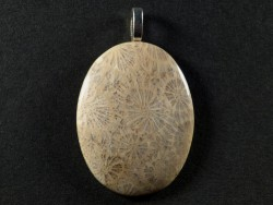 Pendant fossil coral polished oval 3,6cm