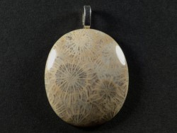 Pendant fossil coral polished oval 3,5x3,0cm