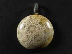 Pendant fossil coral polished round 2,7cm