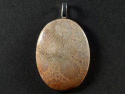 Pendant fossil coral polished oval 3,8cm