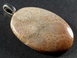 Anhänger fossile Koralle poliert oval 3,8cm