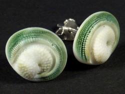 Operculum-Ohrsteckerpaar grün von Turbo fluctuosus Ø1,3cm