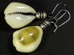 Earring pair with Money Cowry