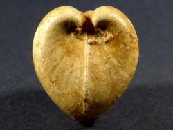 Ceratomya concentrica Jura FR 2,3cm *Unikat*