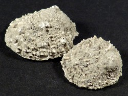 Versteinerung Chama gryphoides Pliozän IT 1,7+cm