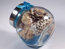 Shell mix in small candy glass 05