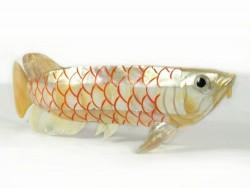 Perlmutt-Arowana *gold-gelb* ID 20cm