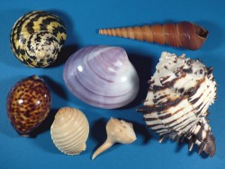 Shell assortment ~ special price