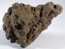 Actinocyathus sp. poliert Karbon MA 11,7 cm *Unikat*
