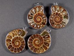 Ammoniten-Anhänger im Paar 3,5 cm (x2)