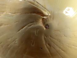 Melo melo IN 22.5cm *Unikat*